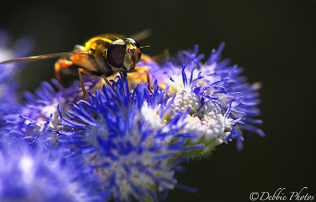 Insect & Flower